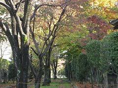 新寺小路緑道