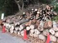 扇坂周辺で多くの木々が伐採されていた!