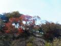 丘上の紅葉