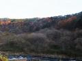 緑葉、紅葉、落葉の帯