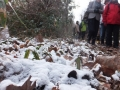 雪と落葉の道を行きます…