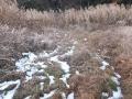 ふかふかの草の道