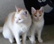 DVC00140  ルフィ猫とママ猫