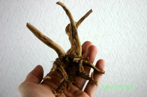 min slim wood1