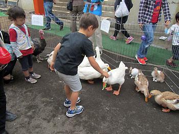 ducks111009.jpg