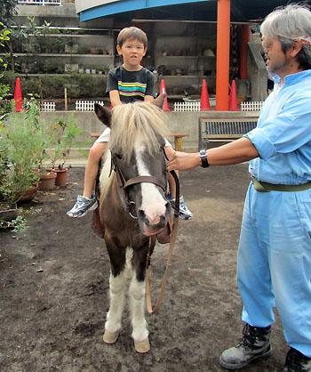 horse111009.jpg