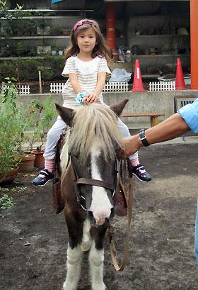 horse2111009.jpg