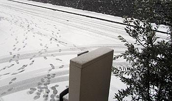 snow120229.jpg