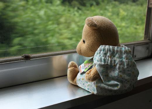 クサギカメムシを見る