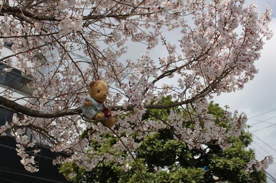 桜の枝に乗って