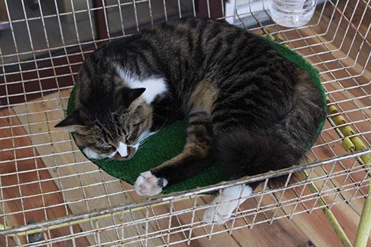 午睡中の猫