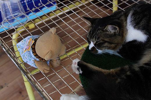 猫に話しかける