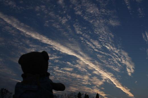 くまちゃん、空を見上げる