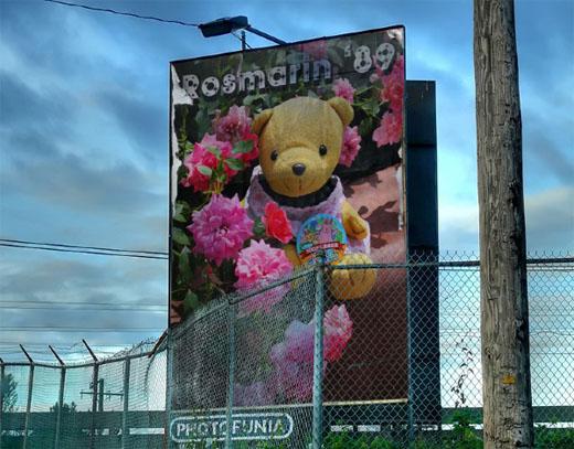 PhotoFunia-Behind the Fence - Rosmarin
