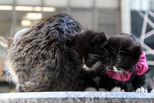 子猫と親猫のお尻