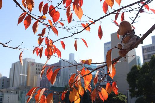 桜の木の上で