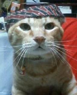 三角巾(愛猫くん)