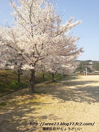 2012年の桜①