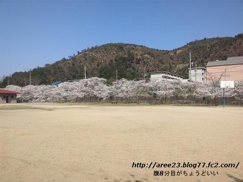2012年の桜③