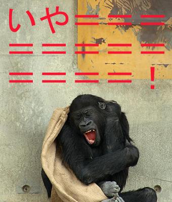 チンパンジーのコピー