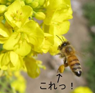ハチのコピー