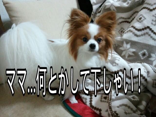 moblog_30c07709.jpg