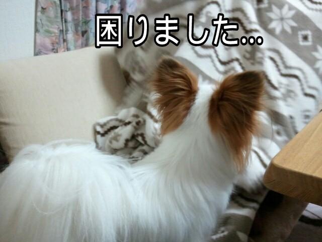 moblog_a0dfc5f1.jpg