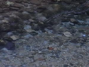 084澄んだ川