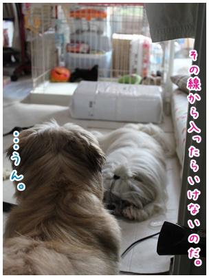 2010-08-04-05.jpg