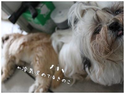 2010-08-05-02.jpg