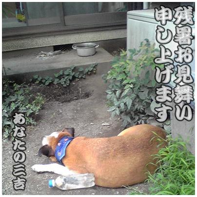 2010-08-12-01.jpg