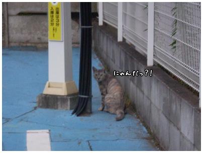 2010-09-03-01.jpg