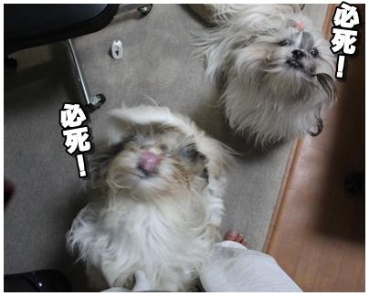 2010-09-04-06.jpg