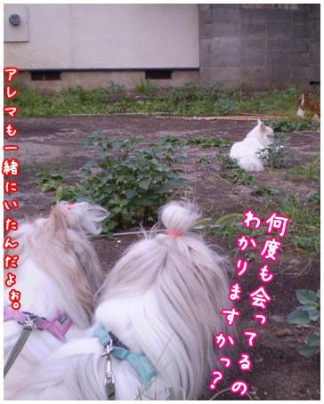 2010-09-06-03.jpg