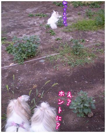 2010-09-06-04.jpg