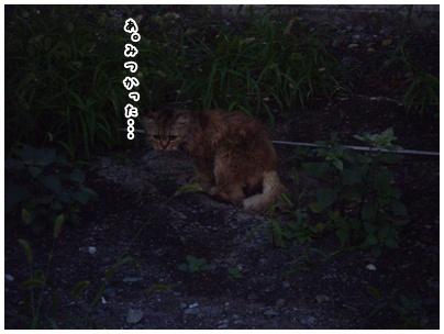 2010-09-14-01.jpg