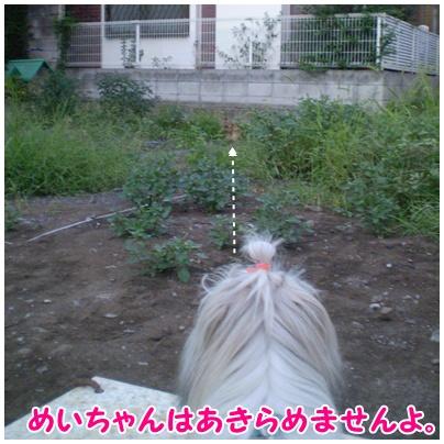 2010-09-14-04.jpg