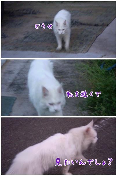 2010-09-14-06.jpg