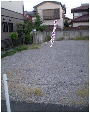 2010-09-15-03.jpg