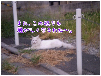 2010-09-15-10.jpg