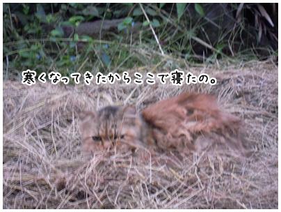2010-10-12-04.jpg