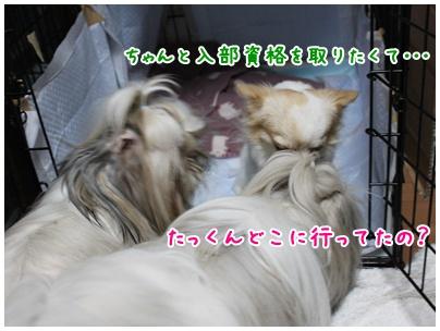 2010-11-04-01.jpg