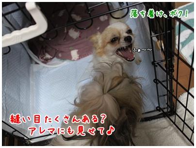 2010-11-04-04.jpg
