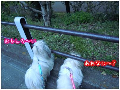 2010-11-09-02.jpg