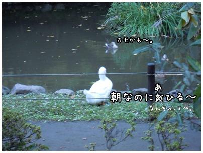 2010-11-09-03.jpg