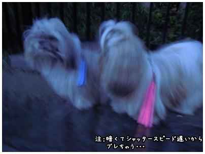 2010-11-10-01.jpg