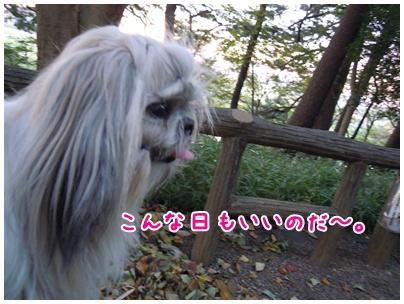 2010-11-10-04.jpg