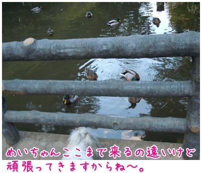 2010-11-12-03.jpg