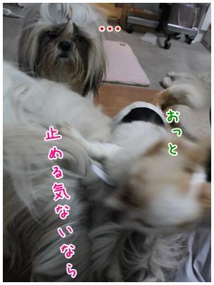 2010-11-24-04.jpg