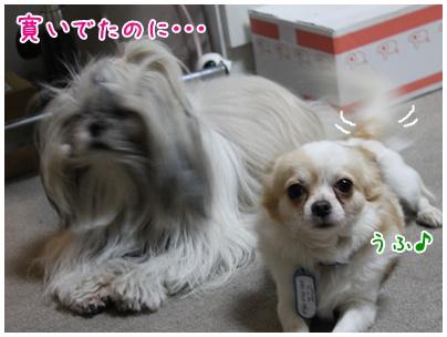 2010-11-27-01.jpg